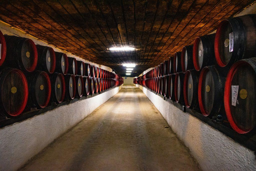 bodega llena de botas de vino